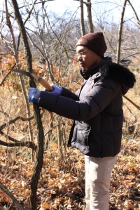 Tracey cutting grapevine in Frick Park