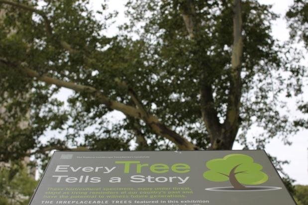 Every Trees Tells aStory