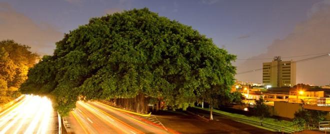rio tree-o