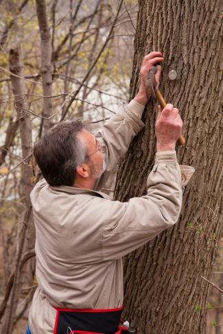 Tagging Tree 2