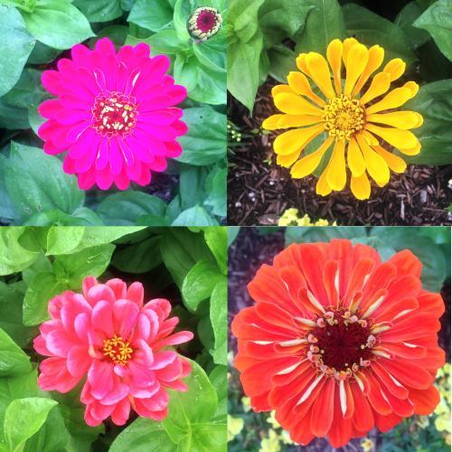 fourflowers